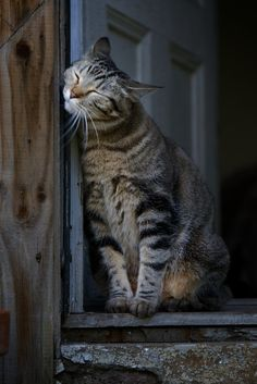 """* * """" Me haz acquired a strange affection  fer dis doorway; soes me wills marks it by smooshin' meez face on itz. Nows, it be official."""""""