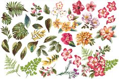 Seamless tropical flowers Vol.3 - Patterns - 5