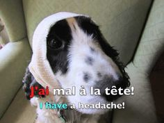 Avoir practice: All about J'ai for beginners. French listening and reading practice for kids. J'ai faim, j'ai soif, j'ai + age, j'ai + possessions in French. French Verbs, Core French