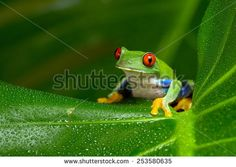 Free Image on Pixabay - Frogs, Not See, Not Hear