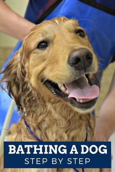 Could your dog use a bit of freshening up? Don't miss our guide to bathing a dog where you will learn where to do it, what products to use, and proper procedure. Bath time can be fun!