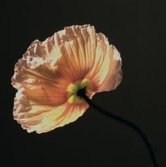 Robert Mapplethorpe | Poppy, 1988