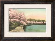 Cherry Blossoms by Tidal Basin Art Print at Art.com