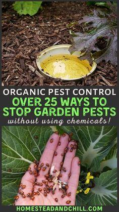 Container Gardening, Garden, Diy Garden, Organic Pest, Garden Pests, Gardening Tips, Organic Gardening, Garden Care, Outdoor Gardens