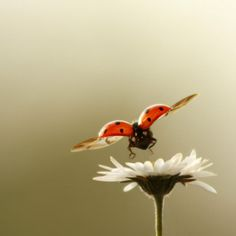 Ladybug and Daisy (great composition)