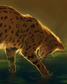 i dont think this was originally wc art but any picture of a serval-looking cat in water is leopardstar to me Warrior Cats Fan Art, Warrior Cats Series, Warrior Cats Books, Warrior Cat Drawings, Big Cats Art, Cat Art, Animal Sketches, Animal Drawings, Fantasy Creatures