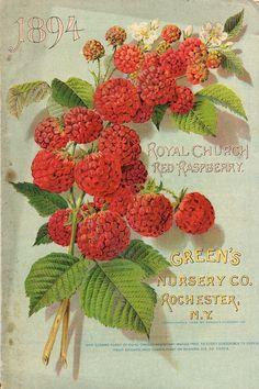 seed packet #printables #ephemera #raspberries