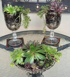 More Fabulous Garden Container Ideas - glass goblets planted with Sempervivum and Sedum...