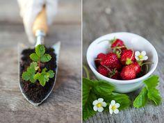 Gartenzauber | Erdbeeren - Gartenzauber