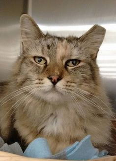 Happy Cat Rescue specializes in the rescue and placement of abused, unwanted and abandoned companion animals. We never discriminate on the basis of health, age or breed. Pet Finder, Animal Rescue, Fur Babies, Abandoned, Cats, Health, Happy, Animals, Left Out