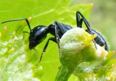 Le printemps, synonyme du retour des beaux jours, s'accompagne aussi d'une foule d'insectes pouvant se révéler plus ou moins gênants. Parmi eux, les fourmis peuvent devenir nuisibles si elles sont en trop grand nombre ou qu'elles tentent d'investir votre...