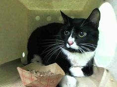 Gone but NOT forgotten, TO BE DESTROYED 2/5/14 * We've seen this again and again-a cat who needs a miracle. Manhattan Center My name is TITO. My Animal ID # is A0989644. I am a male black and white domestic sh mix. The shelter thinks I am about 8. I came in the shelter  on 01/15/2014 from NY 10454, owner surrender reason stated was BITEPEOPLE. https://www.facebook.com/PetsOnDeathRow/photos/a.576546742357162.1073741827.155925874419253/733659709979197/?type=1&relevant_count=1