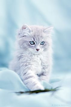 Cute little cat ✿⊱╮