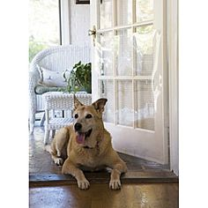 @Overstock - Prevent pet scratches by using the Door ShieldPet door shield made from tough, crystal-clear plasticShield is designed to fit standard-sized doors, but can be cut for smaller doorshttp://www.overstock.com/Pet-Supplies/Door-Shield-for-Pets/3846520/product.html?CID=214117 $23.49