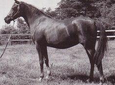 TEHOURA (Radi x Niseyra) 1946 chestnut mare