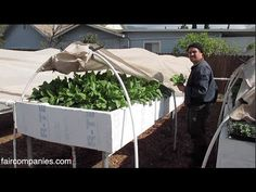 Can you make a living from suburban, backyard aquaponics? : TreeHugger