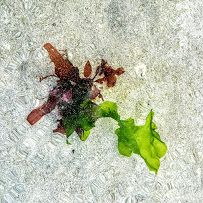 Photo - Google Photos Seaweed, Google, Plants, Photos, Art, Art Background, Pictures, Kunst, Plant