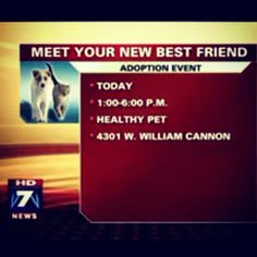 Healthy Pet on ABC7 in ATX