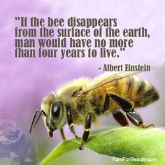 If the bee disappears from the surface of the earth, man would have no more than four years to live.  Albert Einstein
