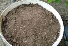 Pěstování okurek v kbelíku: Metoda, s níž dosáhnete 10krát větší úrody jak doposud a nepotřebujete k ní zahradu! – Domaci Tipy Gardening, Compost, Lawn And Garden, Horticulture