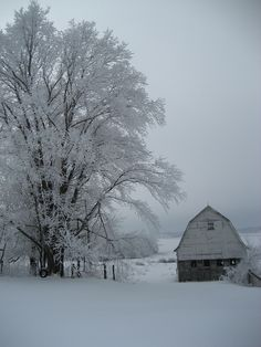 snow white barn