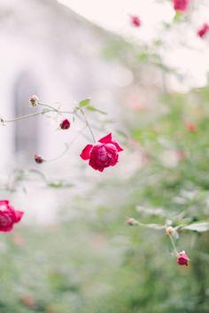 Rose cottage charm