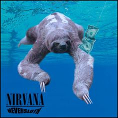 13 Iconic Album Covers, Improved By Sloths Nirvana, Famous Album Covers, Funny Animals, Cute Animals, Animal Fun, Three Toed Sloth, Cute Sloth, Nerd, Cool Pets