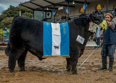 Gran Campeón Macho de Palermo 2015 - Serrucho - Excelente combinación genética