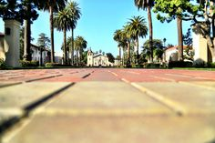 Beautiful Palm Drive #SantaClaraUniversity #BeautifulSCU