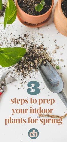 Are you indoor plants ready for Spring? In just 3 easy steps, your houseplants will be prepped and ready to grow big and strong! Big Indoor Plants, House Plant Care, Plant Needs, Water Plants, Gardening For Beginners, Dream Garden, Houseplants, Container Gardening, How To Dry Basil