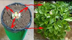 Growing Spinach, Growing Greens, How To Grow Spinach, Garden Planters, Planter Pots, Container Gardening, Gardening Tips, Summer Plants, Hydroponics