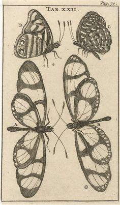 Jan Luyken | Vlinders XXII, Jan Luyken, Jan Claesz ten Hoorn, 1680 | Prent midden- en rechtsboven gemerkt: Tab. XXII. Pag: 70.