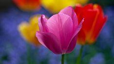 Bloom, Bloeiend, Bloesem, Vervagen
