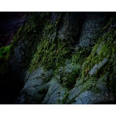 Night Forest Photography, Dark Blue, Moss, Green, Surreal, Nature,... ($28) ❤ liked on Polyvore featuring home, home decor, forest home decor, navy home decor, green home accessories, contemporary home decor and navy blue home decor