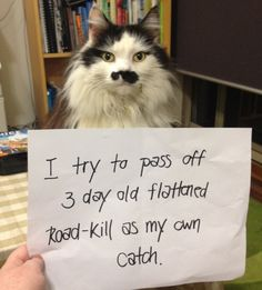 cat shaming | Cat Shaming--Why Should Dog Owners Have All the Fun?