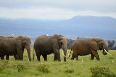 Photo Elephants and Birds II by Paitastone PSI on 500px