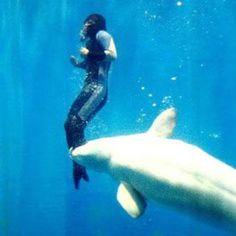 """A baleia que salvou um mergulhador, com câimbras a 20 metros abaixo da superfície.  Quando Yang Yun tentou subir do fundo de uma piscina, ela sentiu câimbra nas pernas e ela não conseguia se mover.  """"Eu comecei a engasgar e afundou ainda mais e pensei que eu estava morto. Até que eu senti essa força incrível me levando para a superfície.""""  Uma baleia Beluga chamada Mila tinha visto o que estava acontecendo e entrou em ação, orientando Yun com segurança de volta para o topo da piscina"""