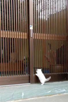 【猫】本日の猫スレ【かわいい】:ハムスター速報