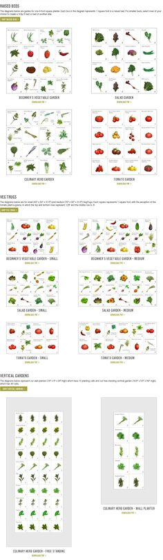 Plant A Grams | what to plant in my edible garden via Williams Sonoma