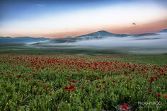 Fotografía Poppies and hills at sunrise por Michele Agostinelli en 500px