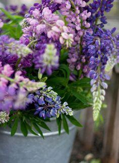 itse kerätyt kukat