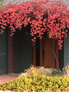 1000 images about san jose area home and garden design on rose garden san jose ca san jose california 39 s rose