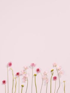 Pink blooms wallpaper blush wallpaper, pink wallpaper и flow
