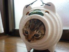 暑中見舞いに使いたいので、夏っぽい猫画像下さい - 〓 ねこメモ 〓 本当に狭い所が好き