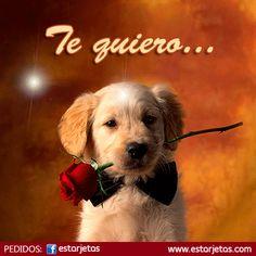 Nuevos sticker para chat de facebook 2015 - Imágenes Bonitas para Facebook Amor y Amistad