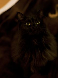 camouflaged black fluffy cat with green green eyes!