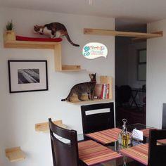 Gimnasio personalizado en forma de biblioteca Cat Jungle Gym, Cat Shelves, Habitats, Ideas Para, Corner Desk, Dog Cat, Flooring, Cat Stuff, Pets