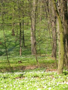 The first flowering in the forest in Kraków after a long winter