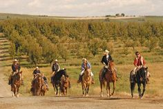 Riding in orchards - Cherrywood B & B at Cultura Winery