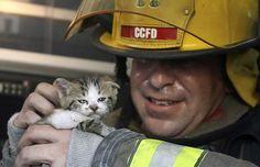 OMG CUTE KITTEN RESCUED.  It's the fireman's smile that slays me.